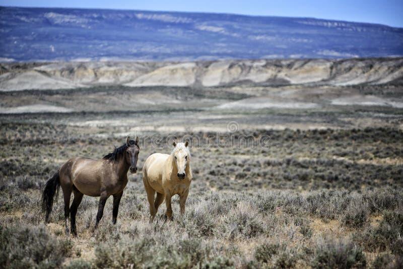 Landschaft des Sand-Waschbeckens wildes Pferde stockfotos