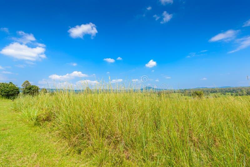 Landschaft des Savannenwaldes und -berges mit einem blauen Himmel und einem whi lizenzfreie stockfotografie