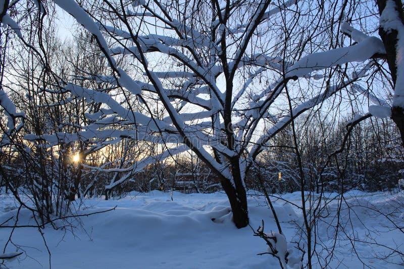 Landschaft des schneebedeckten Waldes des Winters stockfoto