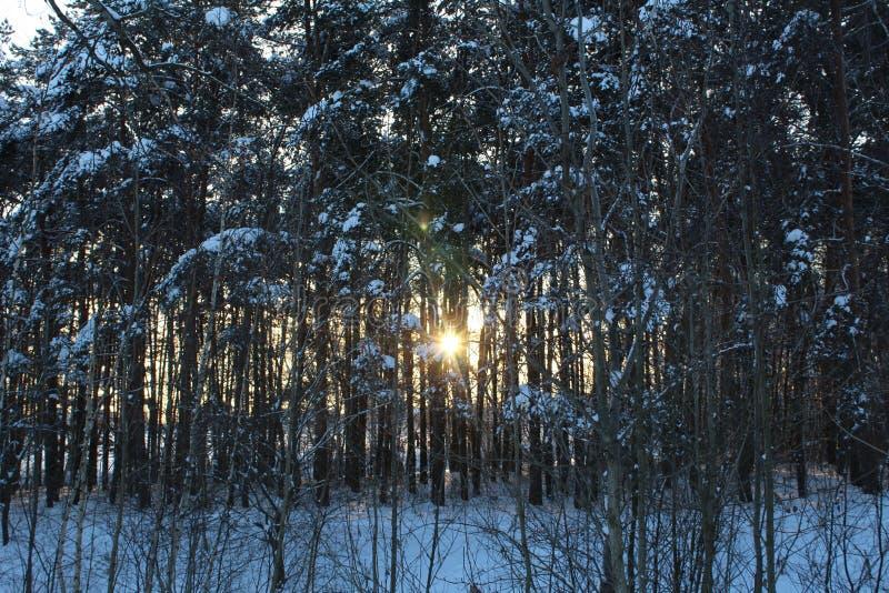 Landschaft des schneebedeckten Waldes des Winters lizenzfreies stockfoto