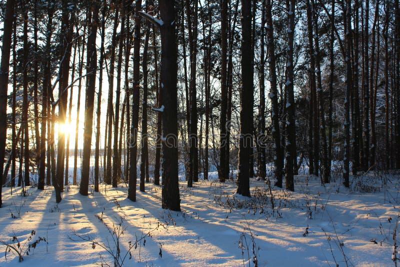 Landschaft des schneebedeckten Waldes des Winters lizenzfreie stockfotografie
