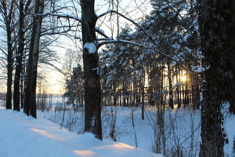 Landschaft des schneebedeckten Waldes des Winters stockbild