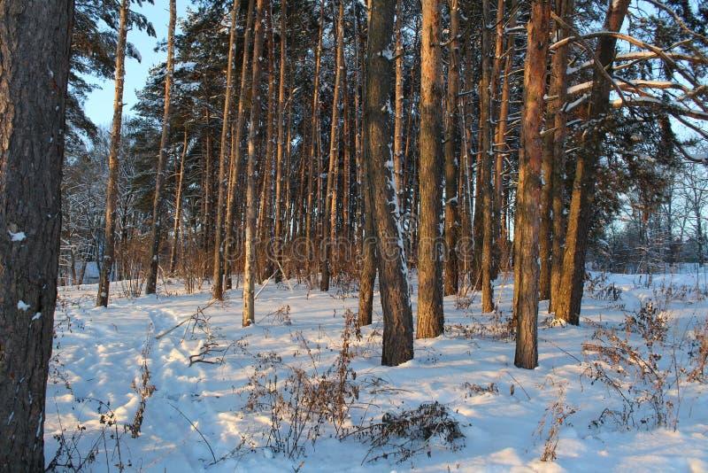 Landschaft des schneebedeckten Waldes des Winters stockbilder
