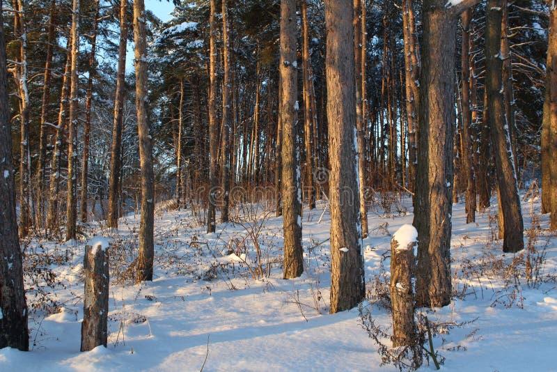Landschaft des schneebedeckten Waldes des Winters lizenzfreies stockbild