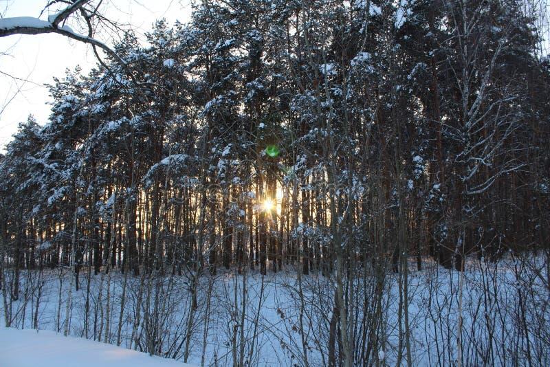Landschaft des schneebedeckten Waldes des Winters lizenzfreie stockfotos