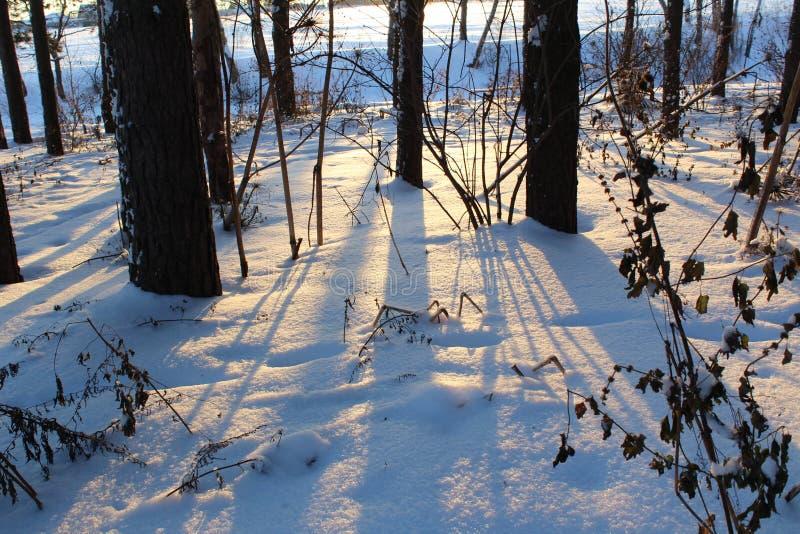 Landschaft des schneebedeckten Waldes des Winters lizenzfreie stockbilder