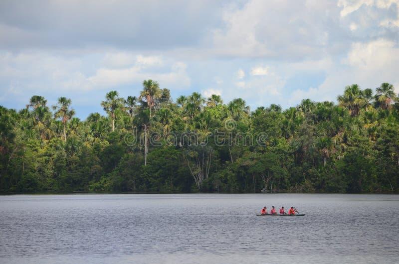 Landschaft des treeline des Amazonas-Regenwaldes, vom Ama stockbilder