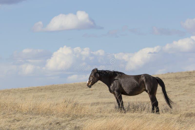 Landschaft des wilden Pferds stockbilder
