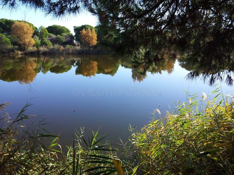 Landschaft in einem Delta lizenzfreies stockbild