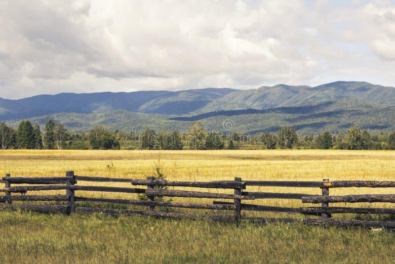 Landschaft eines ländlichen wilden Feldes mit den Blumen eingezäunt mit einem Bretterzaun vor dem hintergrund der grünen Berge un lizenzfreie stockfotografie