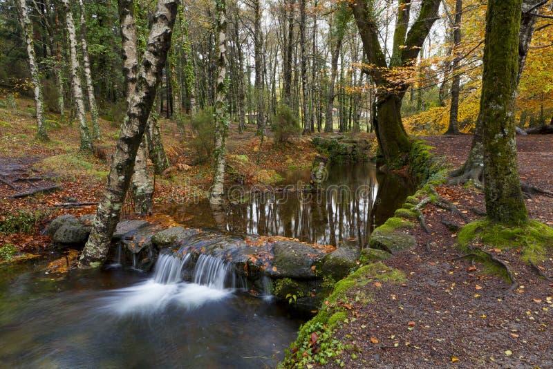 Landschaft eines Waldes mit Bäumen und Wasser stockfotografie