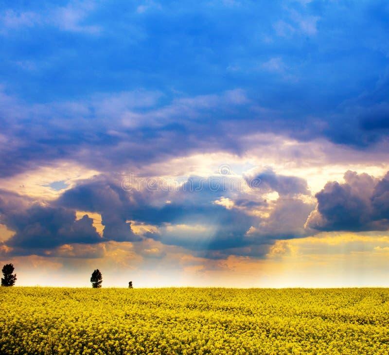 Landschaft - Feld der gelben Blumen und des bewölkten Himmels