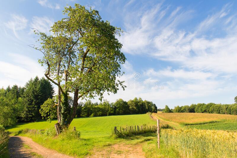 Landschaft Französisch Limousin stockbild