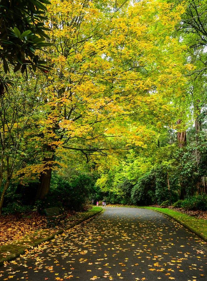 Landschaft im Herbst stockfotografie