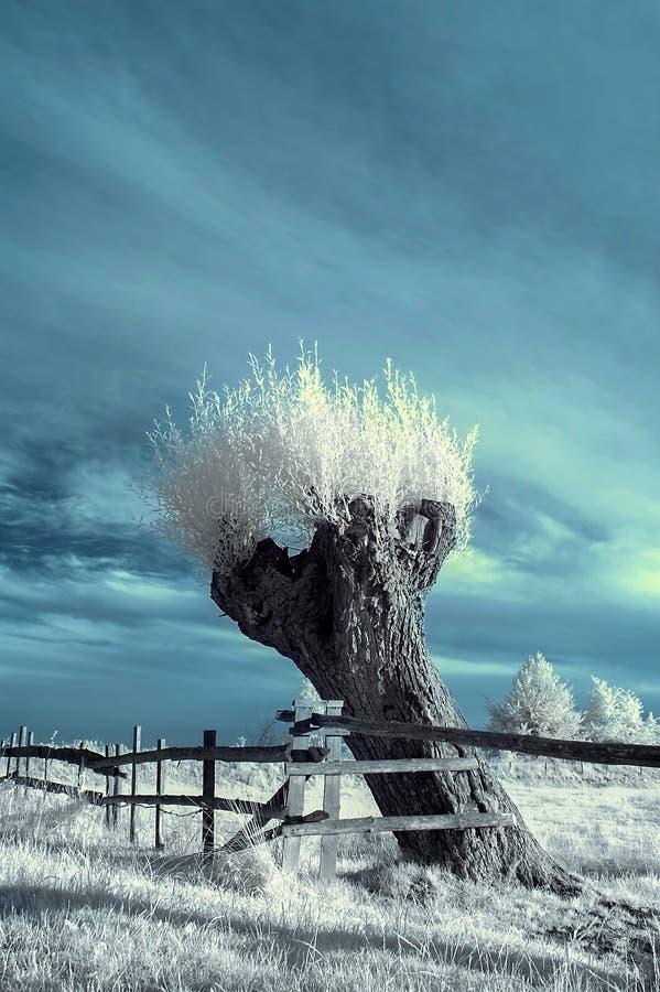 Landschaft im Infrarot lizenzfreie stockfotografie