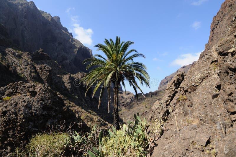 Landschaft im Masca Tal, Tenerife lizenzfreie stockbilder