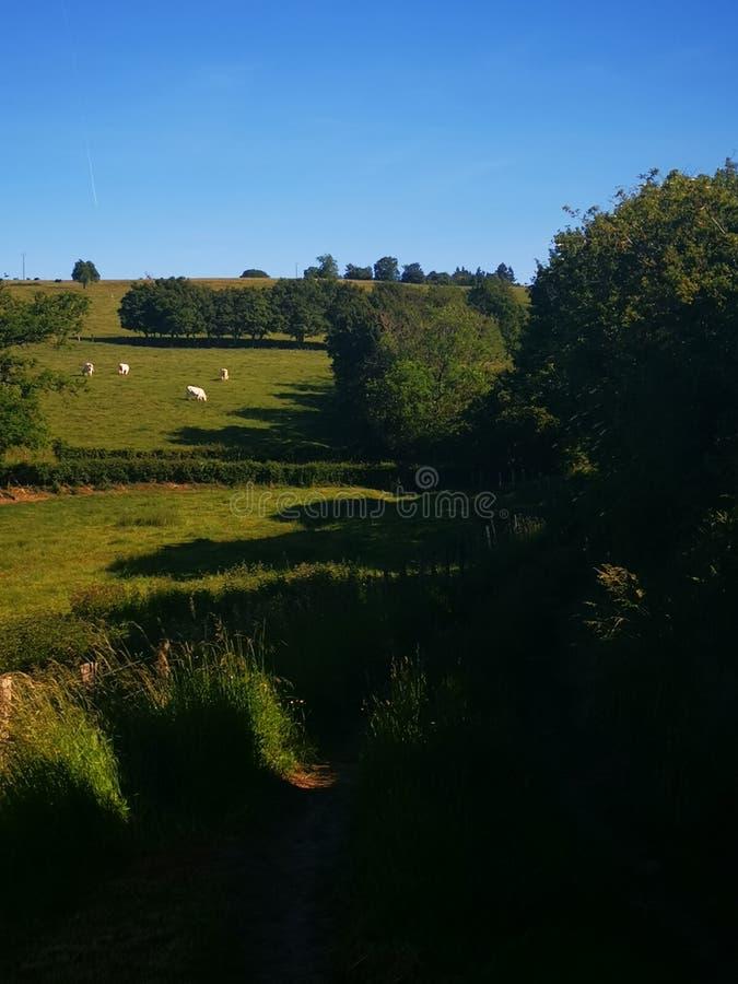 Landschaft irgendwelcher Felder und Kuh im Burgund Frankreich lizenzfreie stockbilder