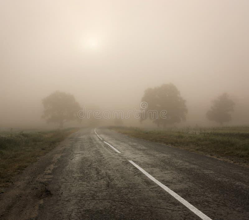 Landschaft mit Bäumen und Straße im Nebel lizenzfreie stockfotografie