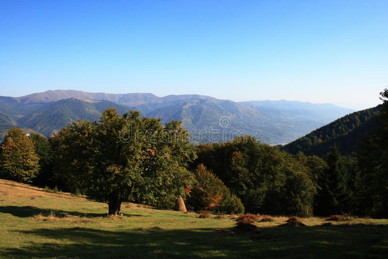 Landschaft mit Baum stockbilder