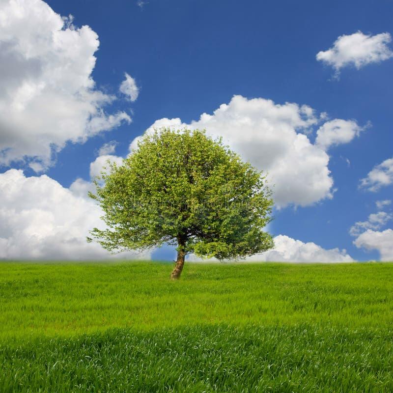 Landschaft mit Baum auf Wiese lizenzfreies stockbild
