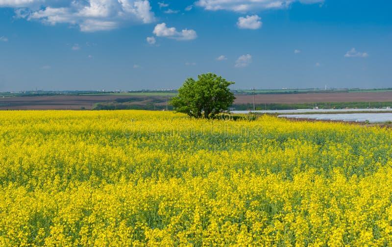 Landschaft mit blühendem Rapssamenfeld nahe Dnipro-Stadt in Mittel-Ukraine stockbild
