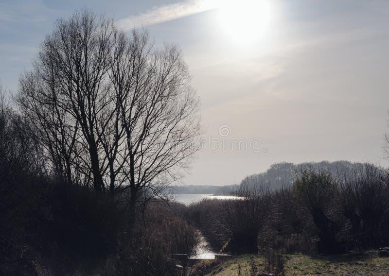Landschaft mit bloßen Bäumen und Schilfen am See unter dem kalten Gewinn lizenzfreie stockfotografie