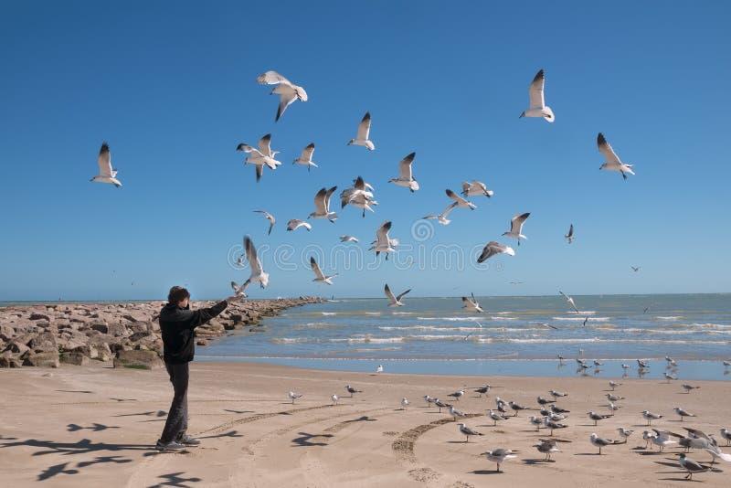 Landschaft mit dem Meer und einem Jugendlichen, der fliegende Seemöwen einzieht Texas Coast, das Golf von Mexiko, US stockfotografie