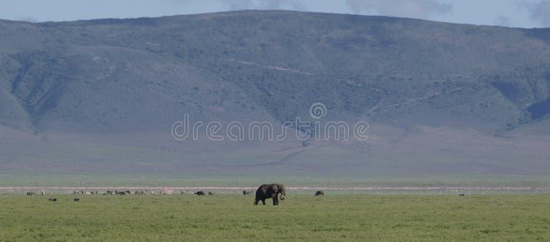 Landschaft mit Elefanten lizenzfreie stockfotos