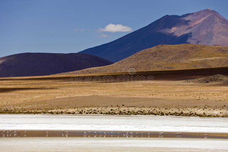 Landschaft mit Flamingo stockbilder