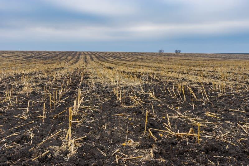 Landschaft mit geerntetem Maisfeld in Ukraine an der Herbstsaison stockfotos