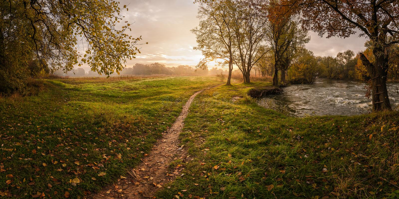 Landschaft mit Laub stockfotos