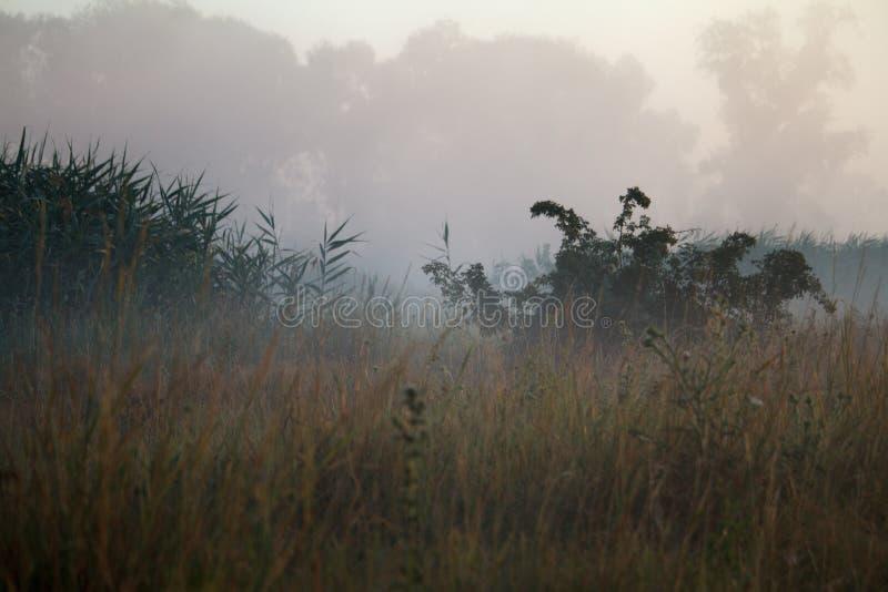 Landschaft mit Nebel über der blühenden Wiese und den Dickichten von Schilfen, selektiver Fokus stockfoto