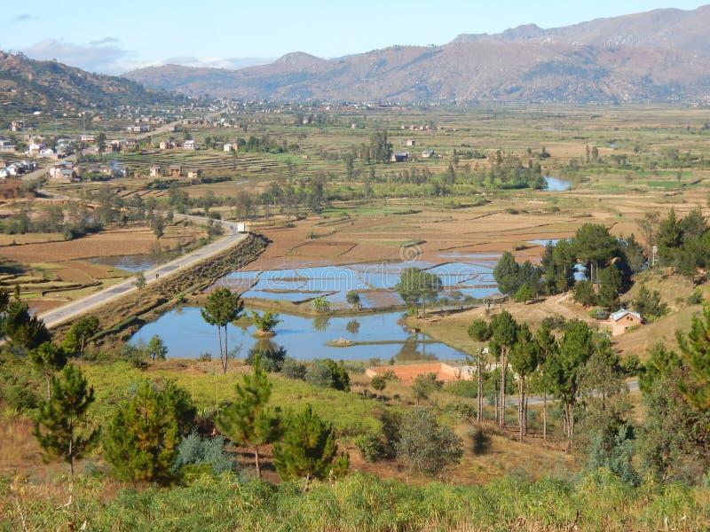 Landschaft mit Reisfeldern, Bäumen und Dorf Madagaskar lizenzfreie stockfotografie