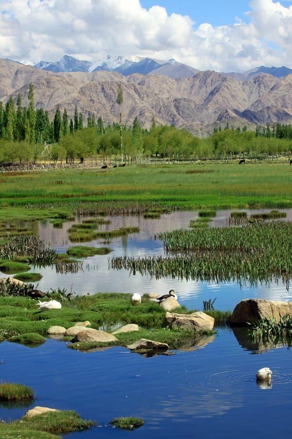 Landschaft mit See auf Gebirgshintergrund lizenzfreie stockfotografie