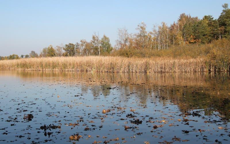 Landschaft mit See, Schilf und Bäumen lizenzfreie stockfotografie