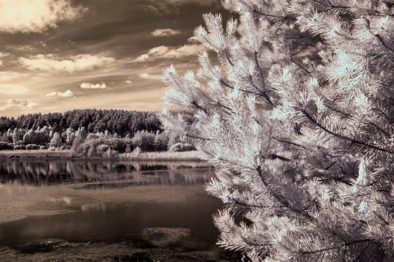 Landschaft mit Seeinfrarot lizenzfreie stockfotos