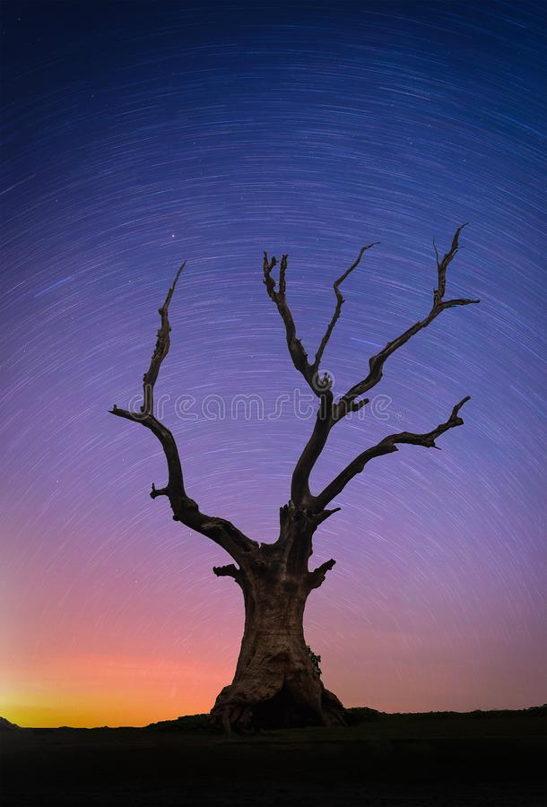 Landschaft mit Sternen schleppen über totem großem Baum des Schattenbildes auf Hügel stockfotos