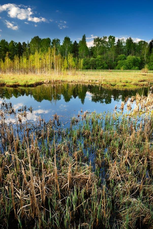 Landschaft mit Sumpf lizenzfreies stockfoto