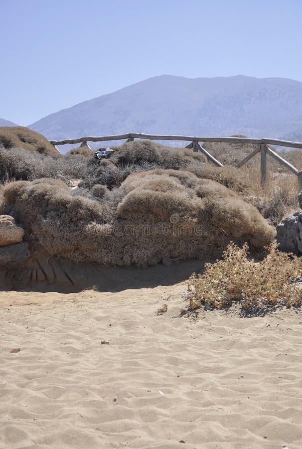 Landschaft mit trockenem Bush auf der Küste nahe Malia-Strand lizenzfreies stockfoto