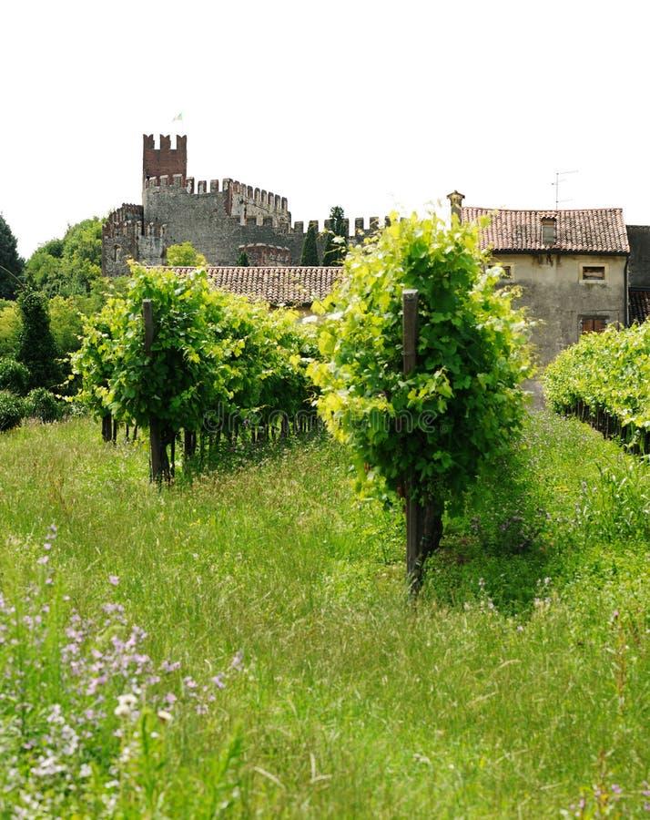 Landschaft mit Weinbergen und Schloss stockbilder