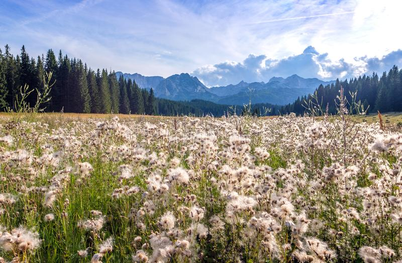 Landschaft mit Wiesen in unmittelbarer Nähe, Herrliche Aussicht auf die Berge im Nationalpark Durmitor in Montenegro, Europa lizenzfreies stockbild