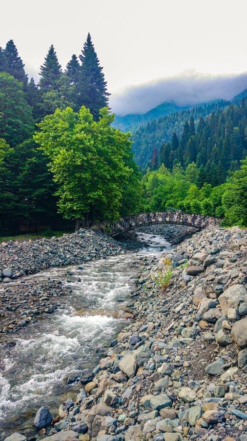 Landschaft mit wunderschönem Wasserfall im Wald inmitten üppiger Vegetation Quellwasser aus dem Berg stockfoto