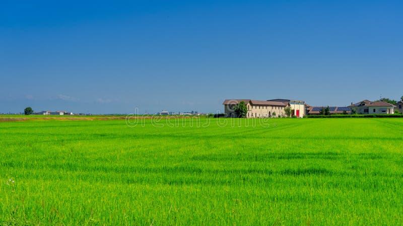 Landschaft nahe Vercelli, Italien, am Sommer stockfoto