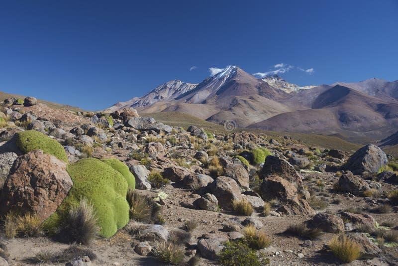 Landschaft Nationalparks Lauca, Chile stockfotos