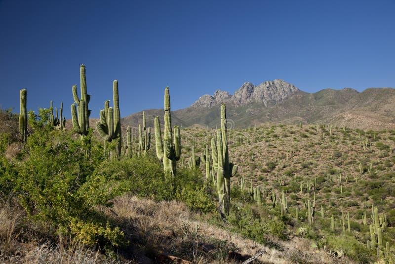 Landschaft Phoenix-Arizona stockfotos