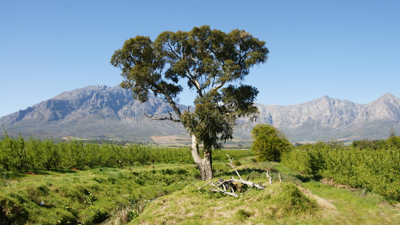Landschaft Südafrika stockbild