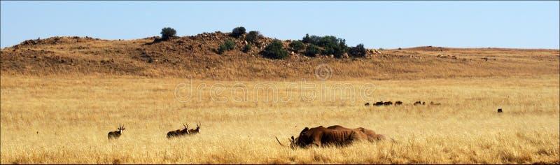 Landschaft in Südafrika stockbild