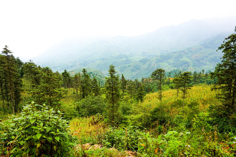 Landschaft in Sa-PA, Vietnam stockfotografie