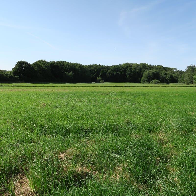 Download Landschaft am Sommer stockfoto. Bild von bunt, bild, bäume - 90232194