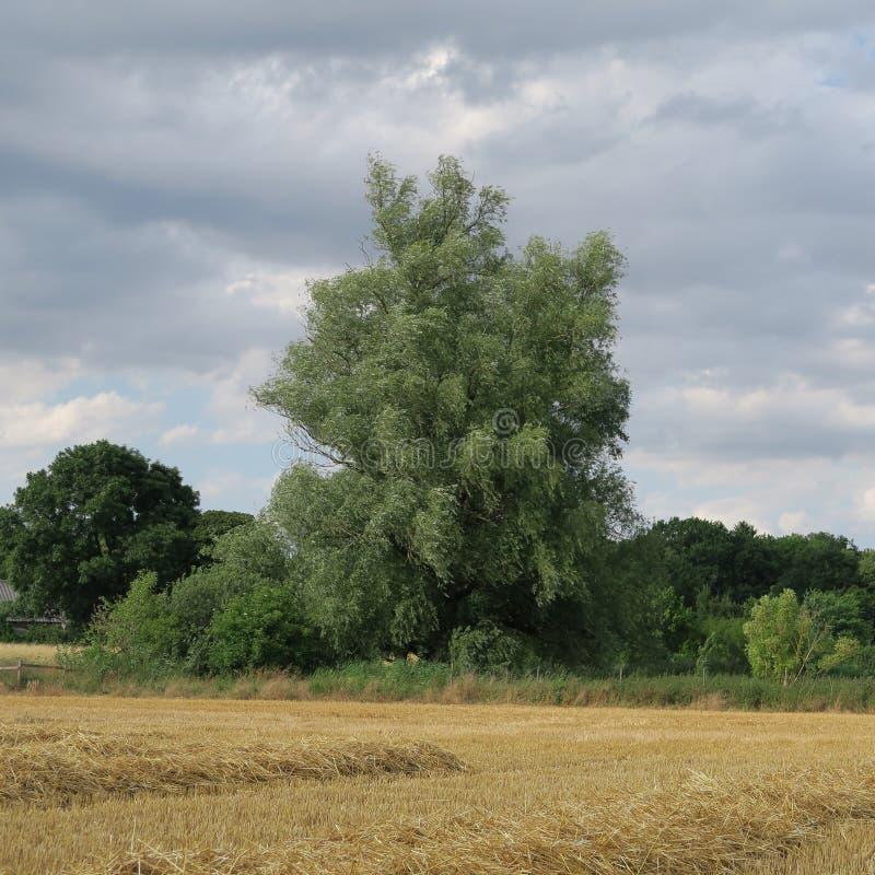 Download Landschaft am Sommer stockbild. Bild von bäume, nord - 90232241